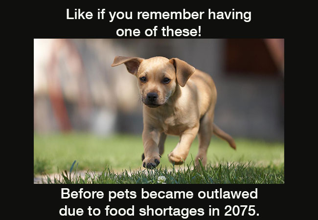 remember-dogs