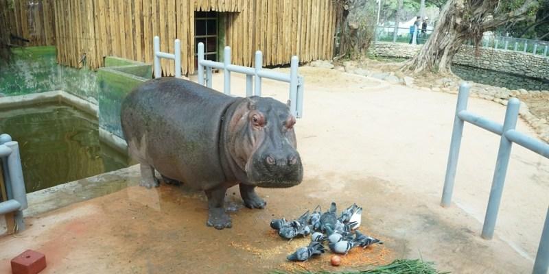 新竹市動物園慶國慶雙十節當天免費參觀!交通路線.停車收費方式。