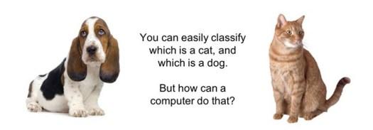 dog-cat-comparison