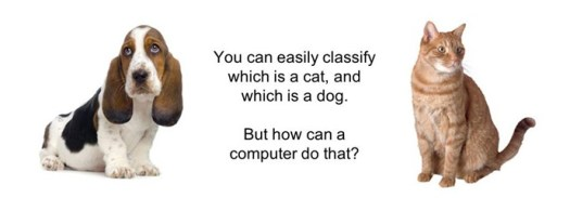 dog-cat-comparison