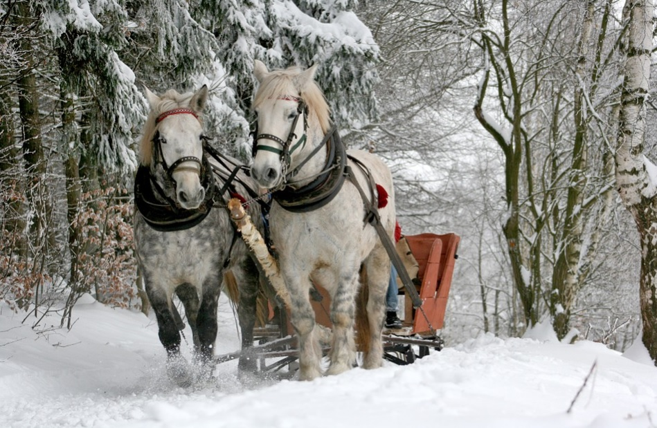 List of 42 Synonyms for Horse | Other Words for Horse
