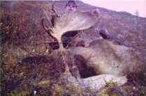 08 moose hunt