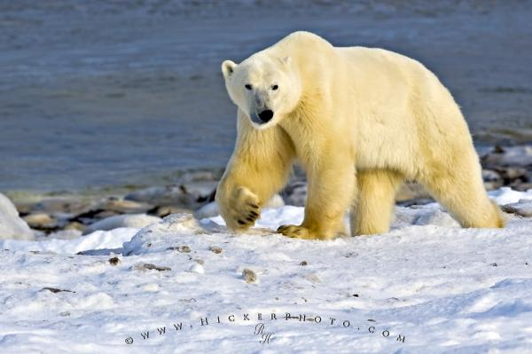 arctic-habitat
