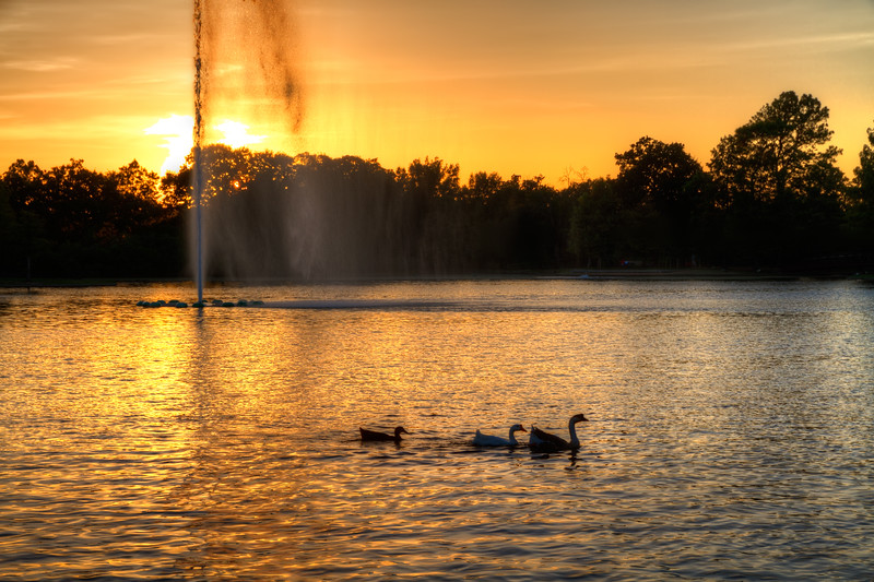 On a recent trip to the Houston Zoo, we stopped outside by McGovern Lake to watch the sun set. What started as a large crowd, quickly thinned out to only a few of us taking photos as the sun dropped below the trees.  Photo by Tim Stanley Photography.