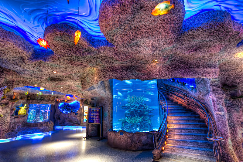 The centerpiece of the Houston DowntownAquarium is the restaurant and the large fish tanks throughout. There is a winding staircase around a huge, vertical fish tank as you make your way to restaurant upstairs. But even if you don't eat, you can still sneak in a take a peak at the bottom half. Photo by Tim Stanley Photography.