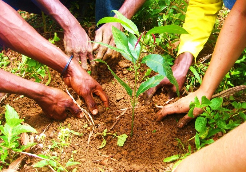 YOUTH TRAINED ON TREE PLANTING