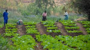 LACK OF INVESTMENT AFFECTS AGRICULTURAL DIVERSIFICATION