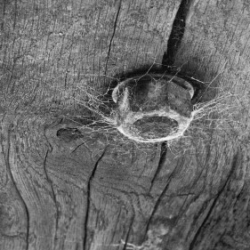 Black & White Photography of a Cobweb Spun on a Nut