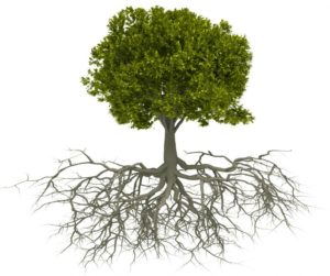 3-Ways-to-Keep-Tree-Roots-from-Growing-in-your-Sewer-Lines-865x723