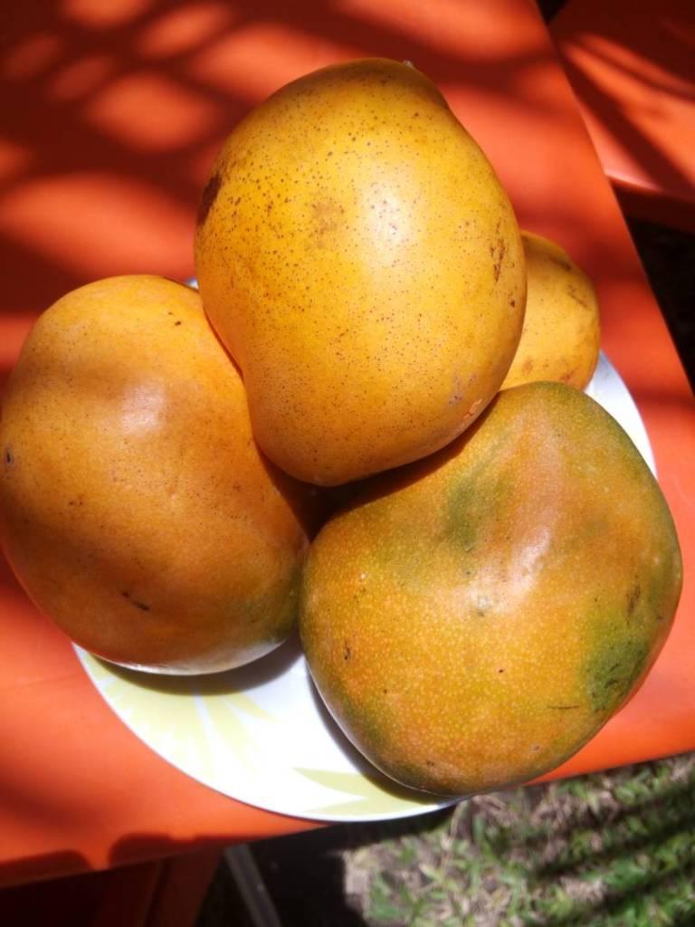 mangoro love, amour de mangue