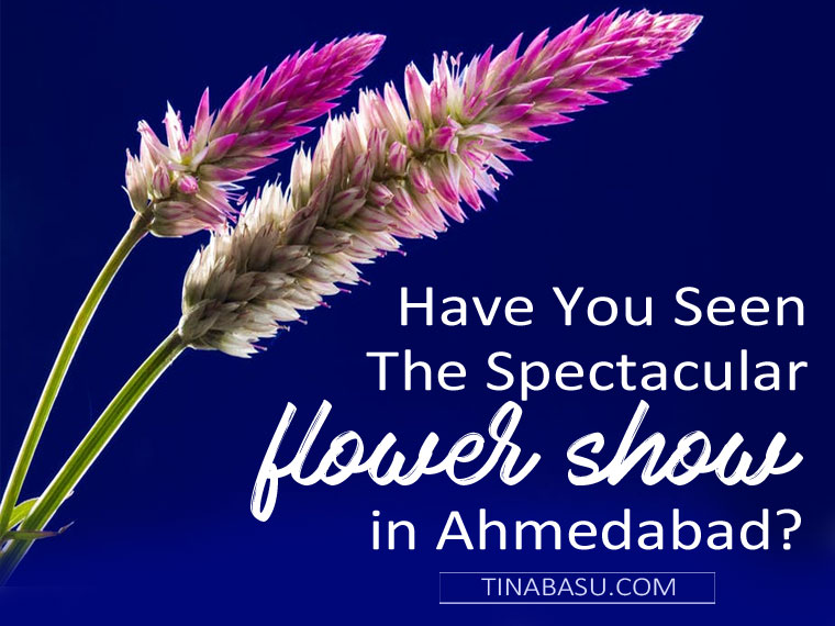 flower show in AHmedabad