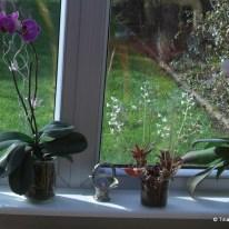 Fensterbank mit Orchideen