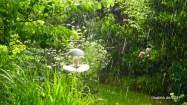 Starkregen und Sonnenschein