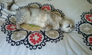 cute cat on bed