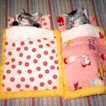 kitten-naps