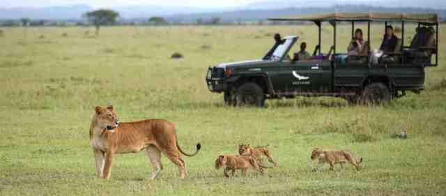 serengati african safari