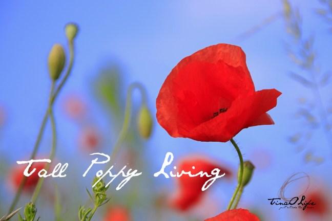 Tall Poppy Life