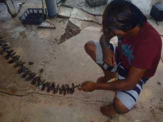 Preparing Pearl Oysters