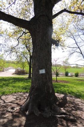Tribute Tree Big.JPG