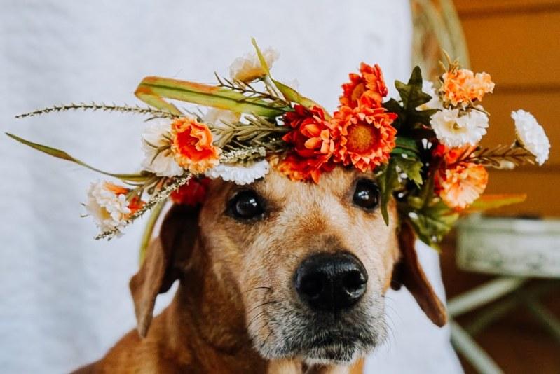 My Dog Diamond Wearing her dog Flower Crown DIY