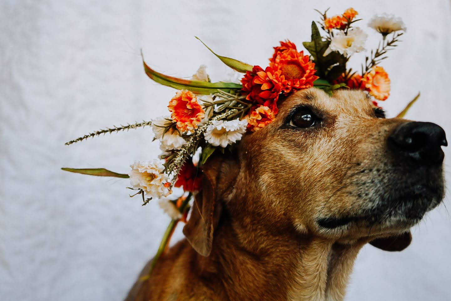 Dog Wearing Flower Crown