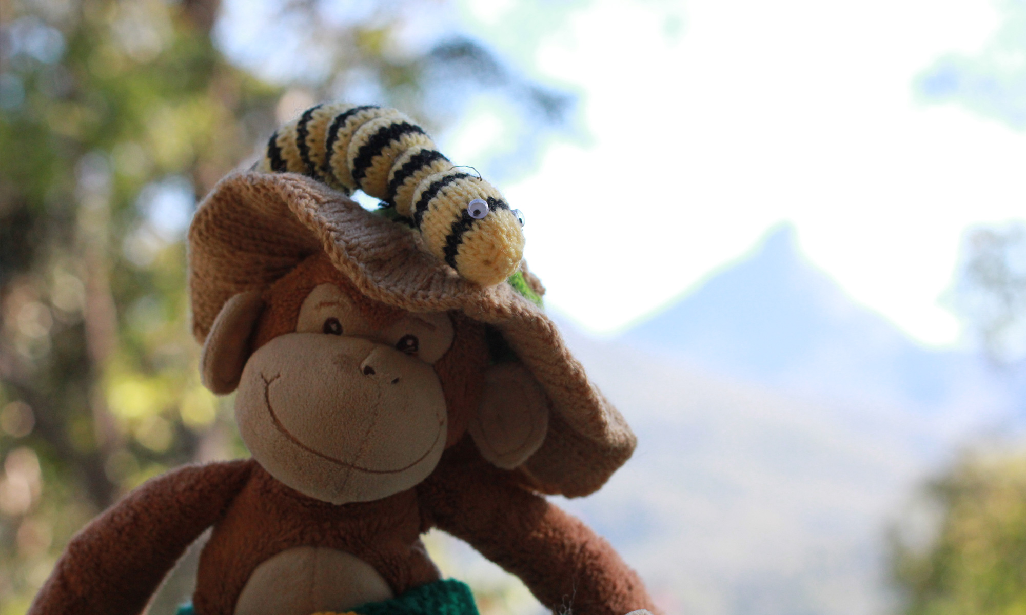 Monkey's Great Adventures by Tina Wilson