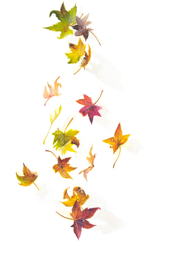 Watercolour painting of falling autumn leaves by artist Tina Wilson