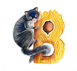 Bobuck possum illustration by artist Tina Wilson