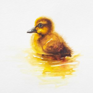 Watercolour painting of a duckling by Tina Wilson