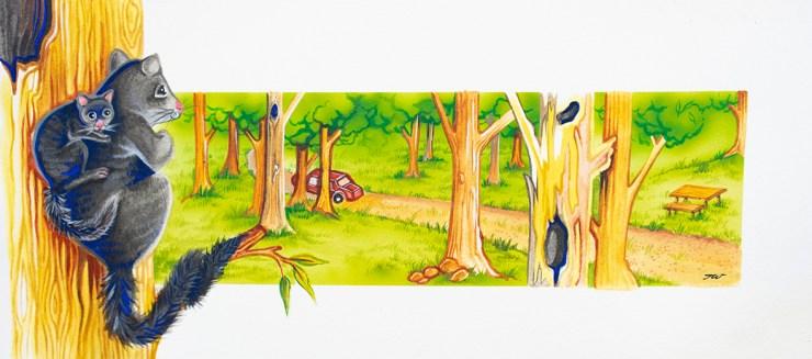 Illustration of a Bobuck Possum by Tina Wilson