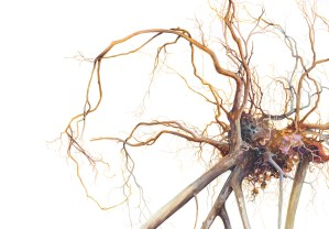 Watercolour painting of tangled roots by Tina Wilson