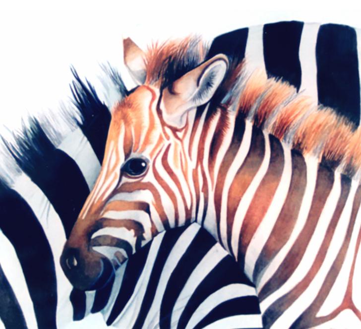 Baby zebra watercolour painting