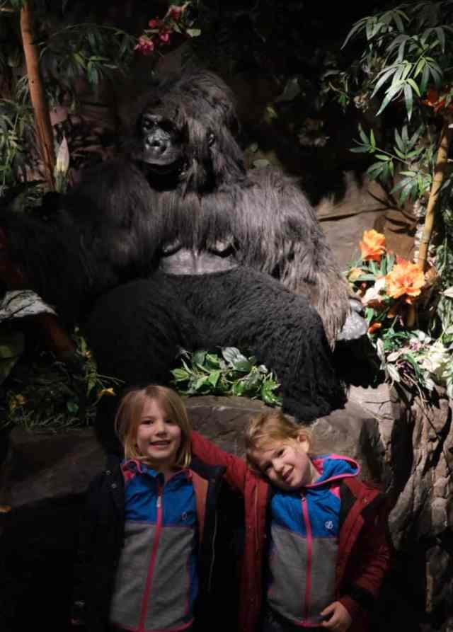 Tin Box girls stood in front on a gorilla in the Rainforest Cafe in London