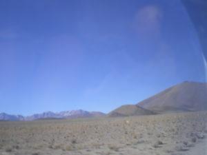 Vigognes, près d'Uyuni, Bolivie
