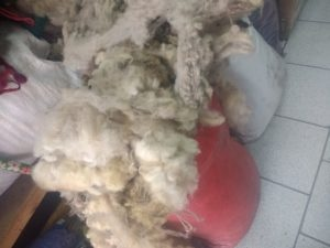 On démarre avec cette laine à bas prix. mais de bonne qualité tout de même, fibre longue et douce