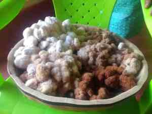 Echantillons de cotons natifs, encore avec leurs graines, production de la Señora Rosita de Morrrope, Pérou