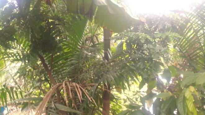 Végétation typique du Brésil