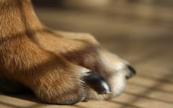 Dog's Nail