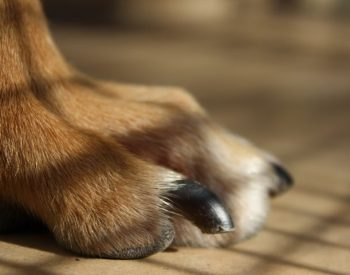How To Know When To Trim Your Dog's Nails