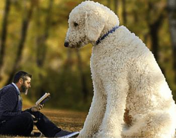 Juji – Digital Celebrity Dog: Myth or real