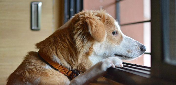 Pet Life In Quarantine