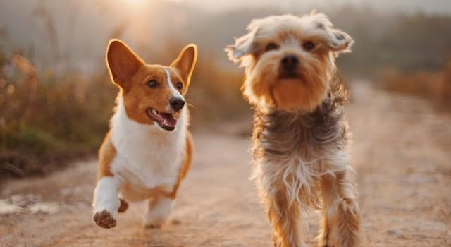 Pet Care Expenses