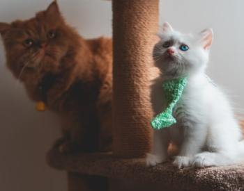 7 Best Cat Trees for Large Cats in 2020: Buying Guide