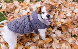Reasons Your Dog Should Wear a Jacket