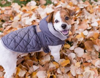 6 Reasons Your Dog Should Wear a Jacket