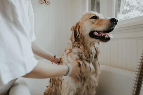 How Often Should I Shampoo My Dog