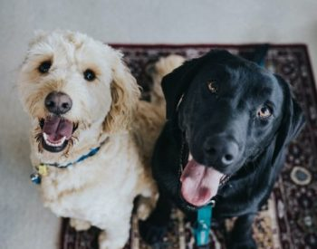 10 Pet insurance Tips The Owners Should Know