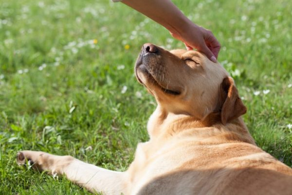 First Aid Tips For Pet Owners