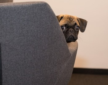 7 Breeds That Will Love Living In An Apartment