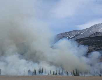 Wildfires and How They Can Affect Your Dog's Health and Lifestyle
